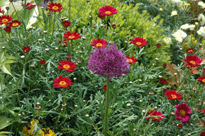 ©Jack Dunckley Award Winning Landscape Designer RHS Flower Show 2009 Malvern Spring-5.jpg