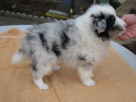 """Snoview's Mystery Blue Ribbon """"Ribbie"""" will be staying at Snoview"""