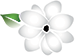 PETITE PRINT STUDIO LOGO_SMALL SAMPAGUITA ONLY.png