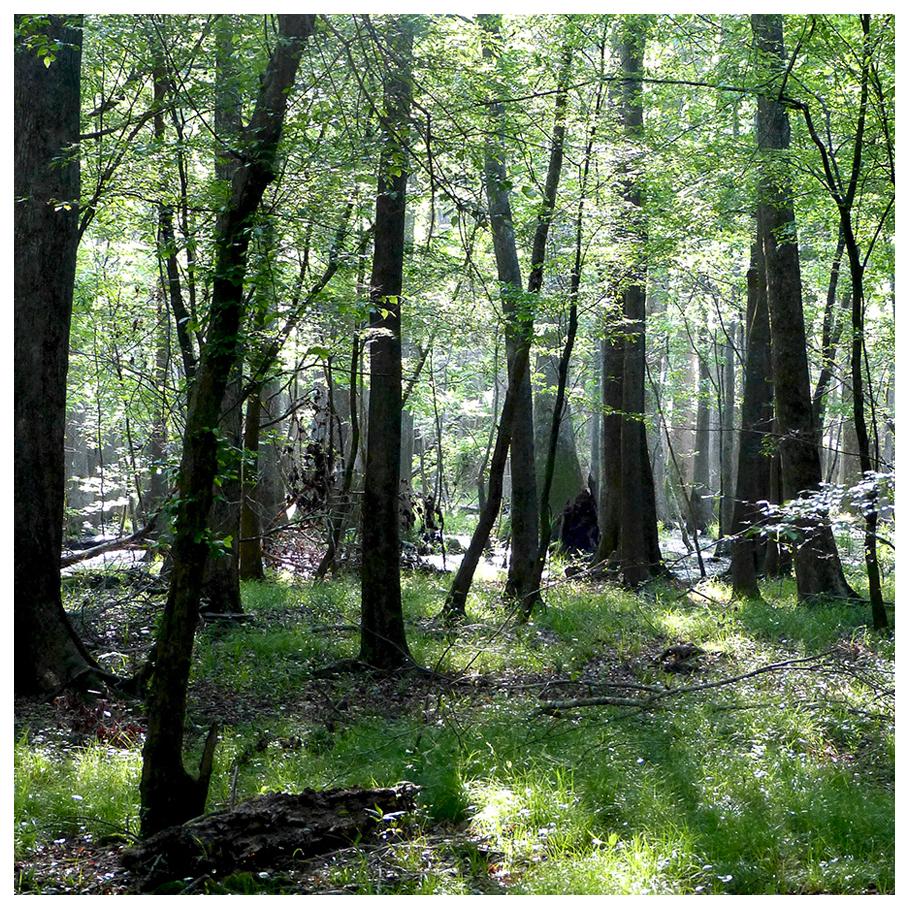 Congaree National Forest, South Carolina