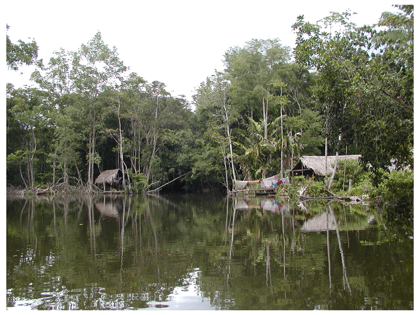 Warau Indian Huts, Orinocco Delta, Venezuela