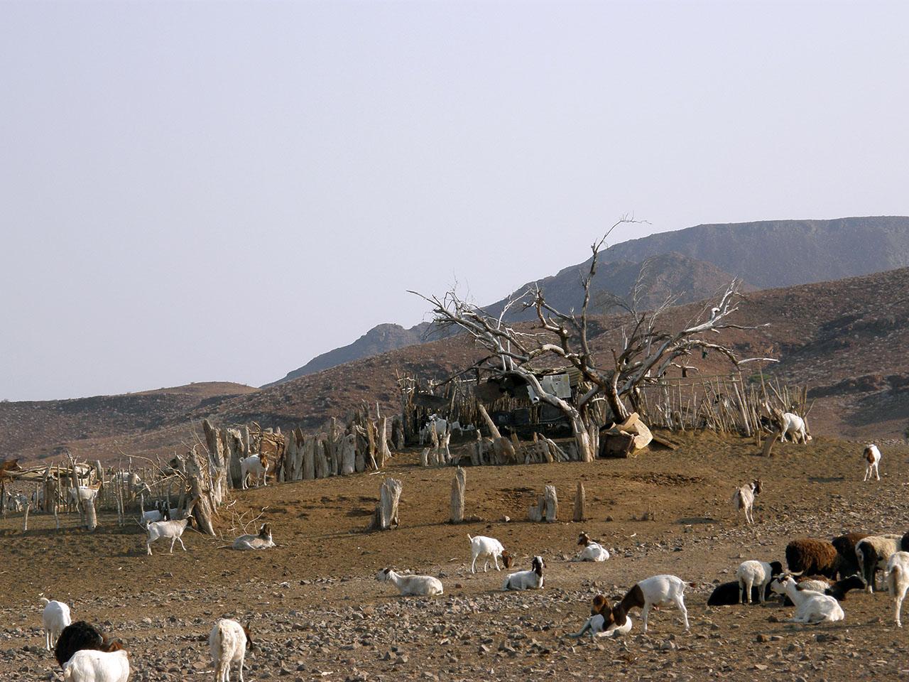 Livestock barn, Damaraland, Namibia