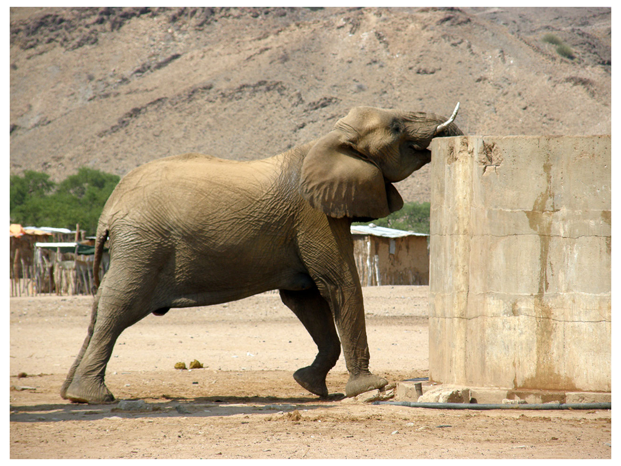 Elephant drinking from reservoir