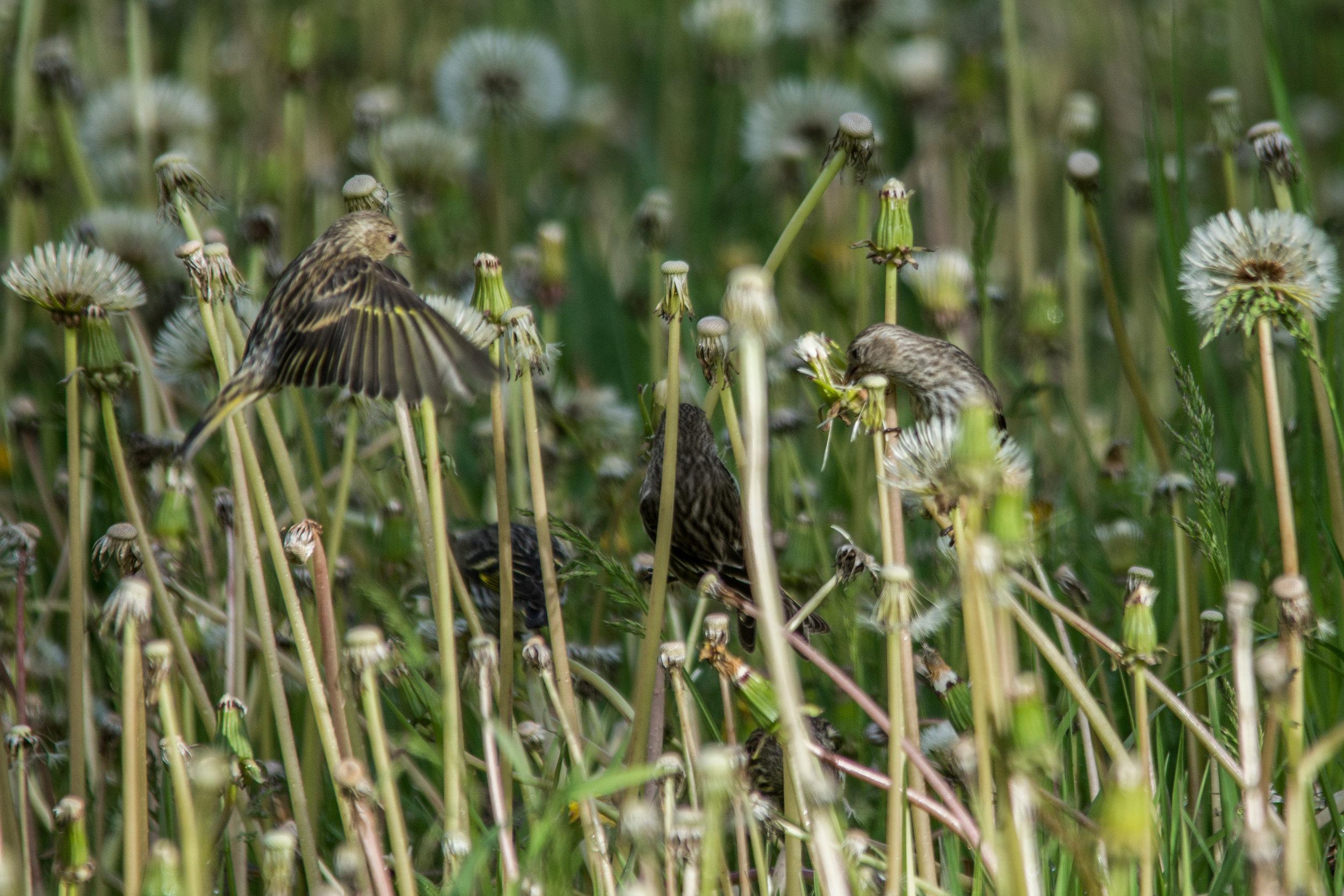 Birdie 03.jpg