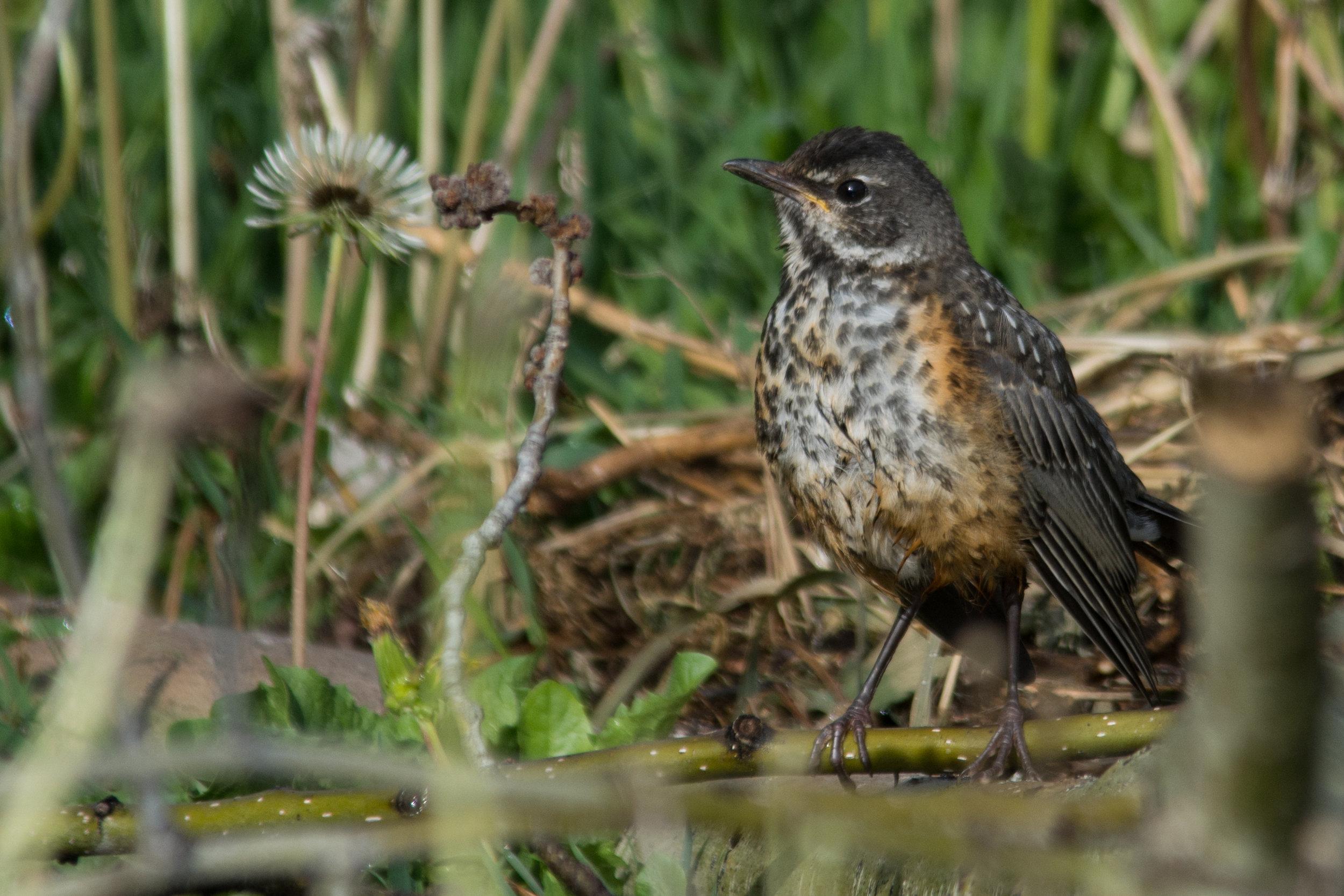 Birdie 04.jpg