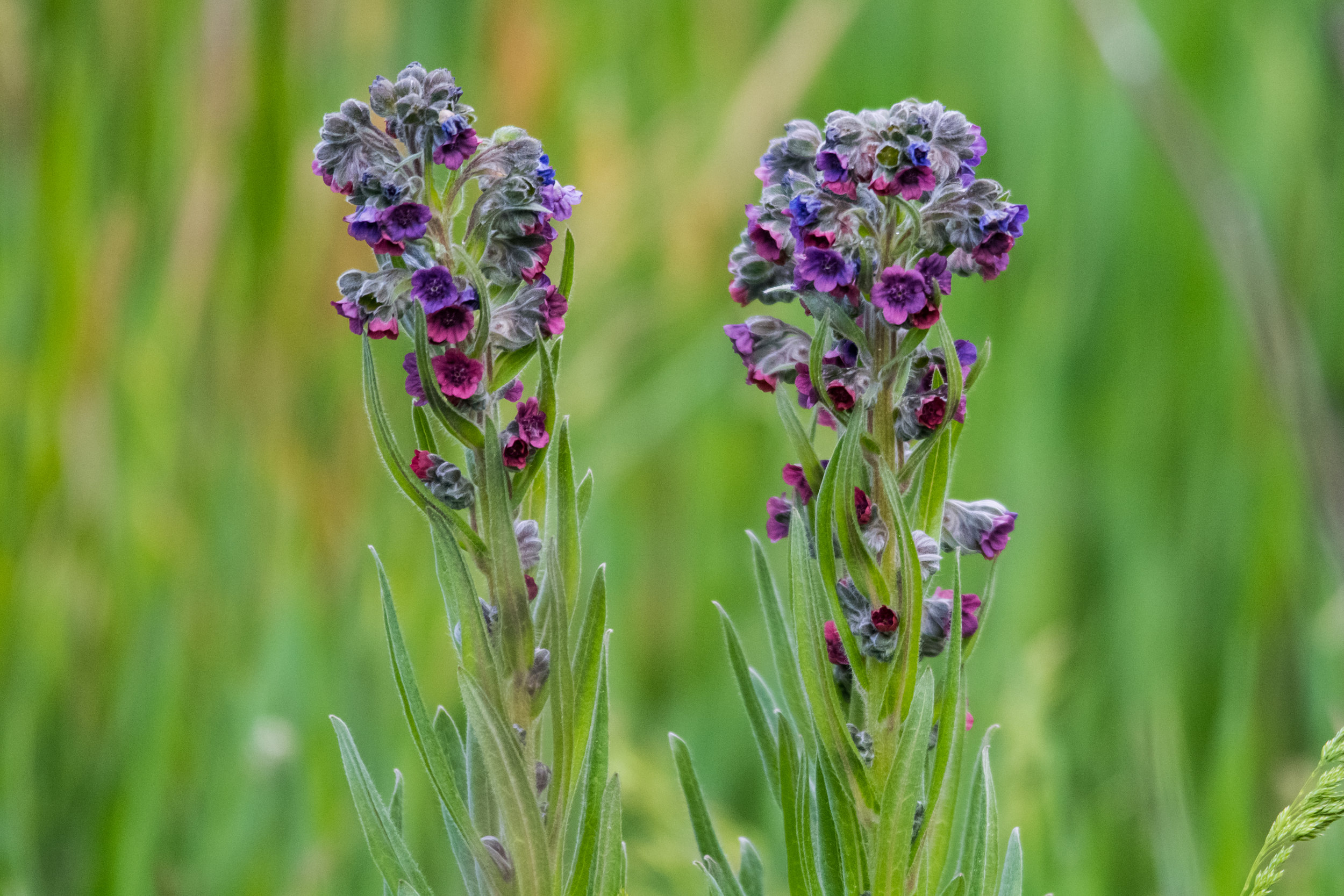 Flowers 01.jpg