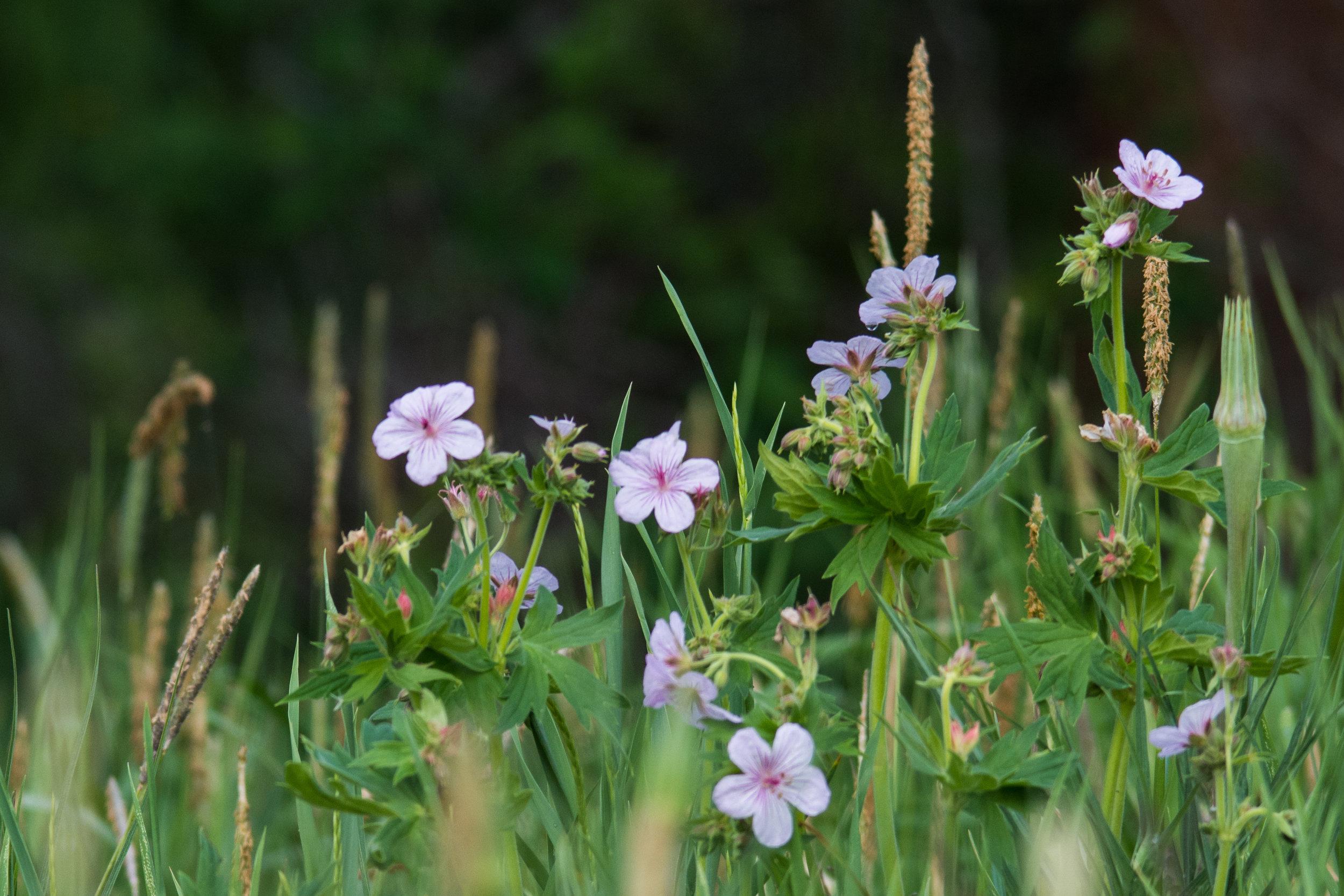 Flowers 03.jpg