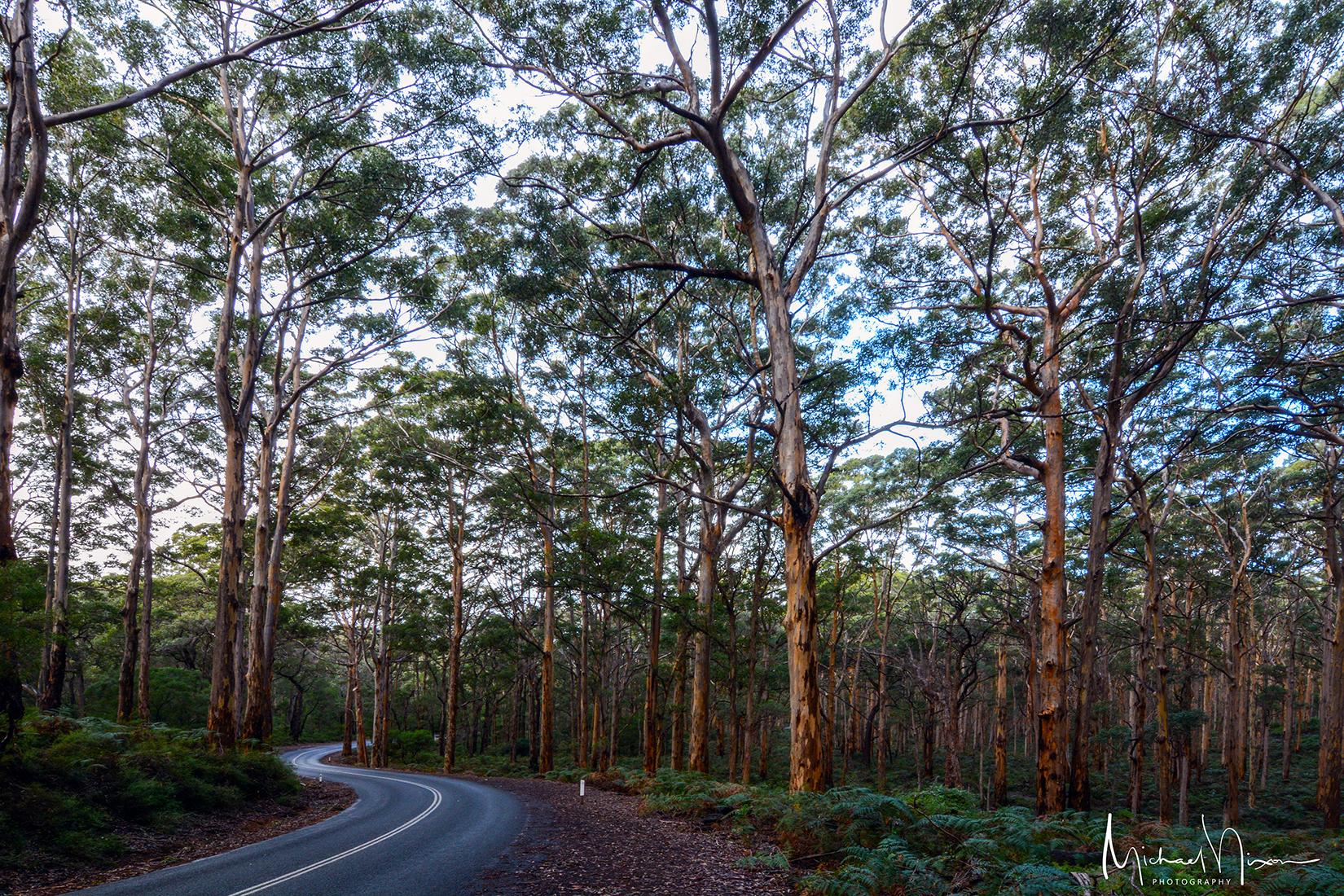 Boranup Karri Forest, Margaret River