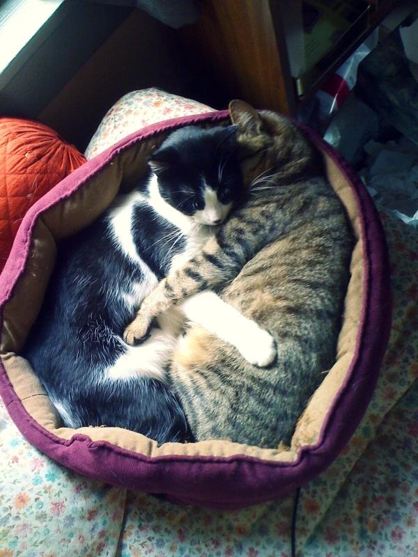 Lou-Lou & Libby