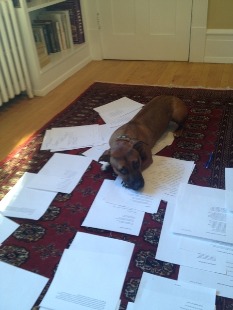 Photo: Ella May lying on top of printed poems laid out on the carpet, possibly helping her human with the editing process.
