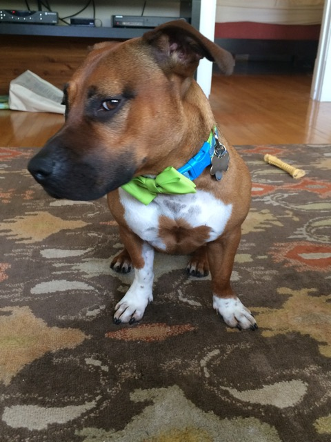 Photo: Ella May sitting down and giving some serious side eye, wearing a green bowtie collar.