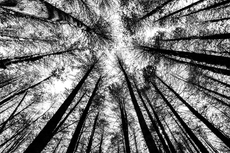 Forest-1 b.jpg