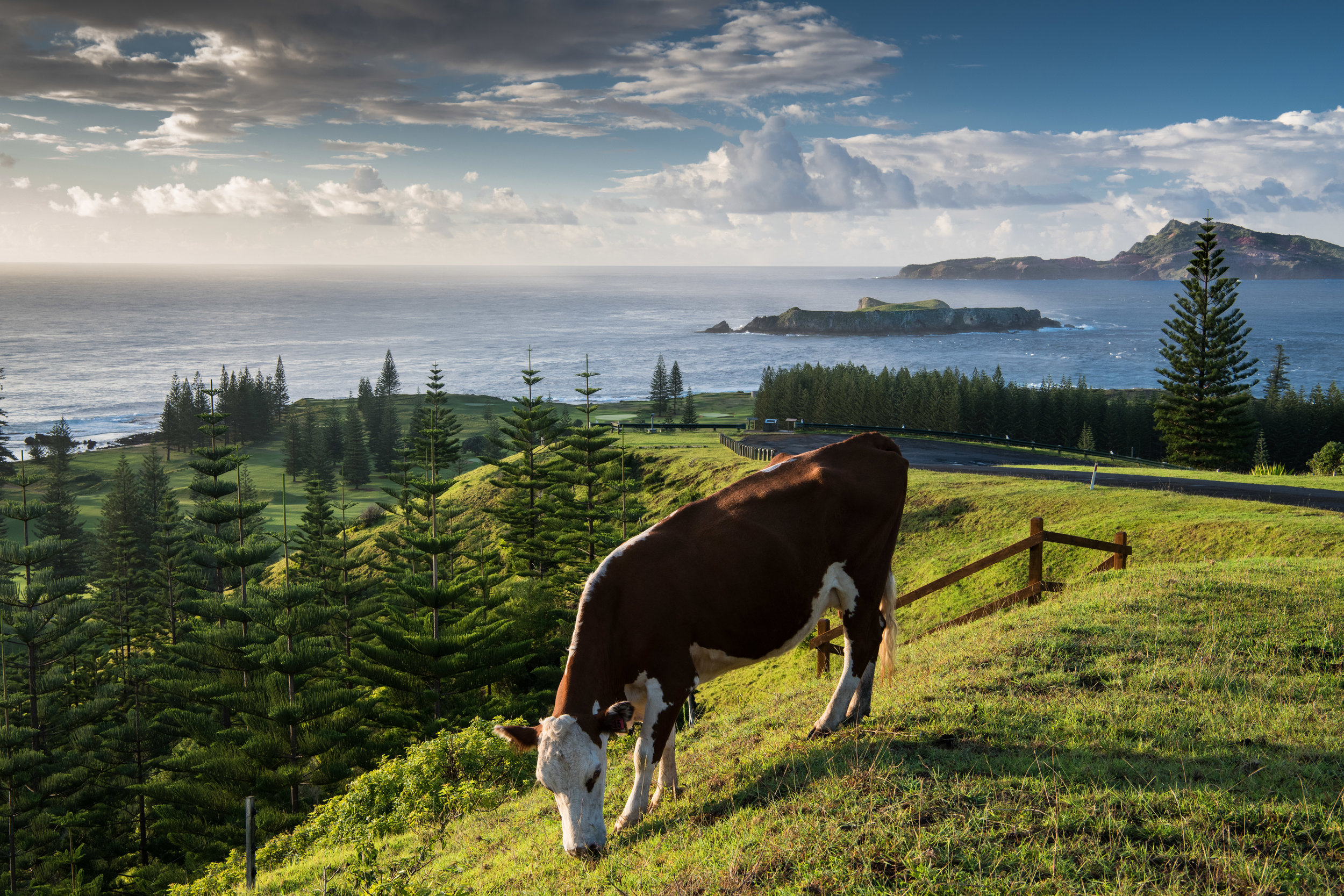 Cow and Nepean Island - 1.jpg