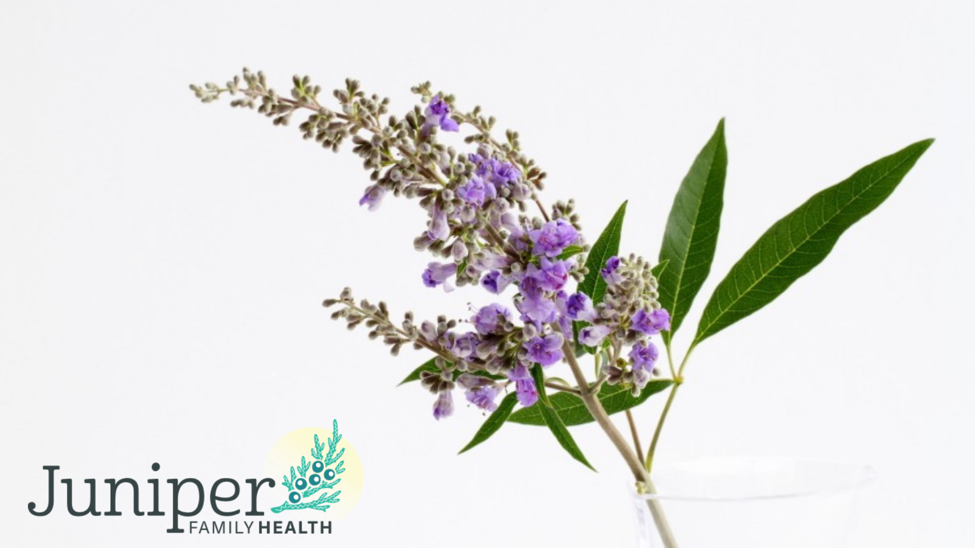 naturopath victoria, naturopathic doctor victoria, naturopathic clinics victoria, naturopathic clinics victoria, naturopathic physician, naturopathic, naturopath, women's health, vitex, chaste tree, chaste berry, PMS, PMDD, menstrual disorders, hormones, herbal medicine