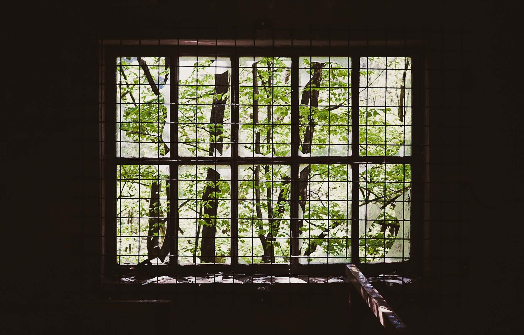 Unsplash_green-window.jpeg