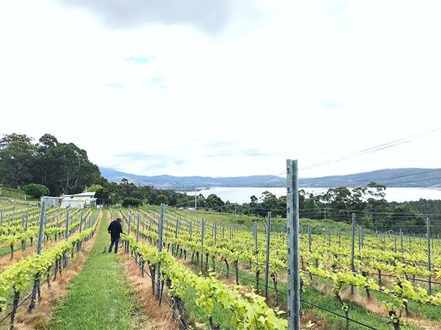 Saturday morning documentation. A day at home with the gang. . . . . . #ticklebackridgevineyard #ticklebackridge #ticklebackridgeestate #ticklebackridgewines #tasmania