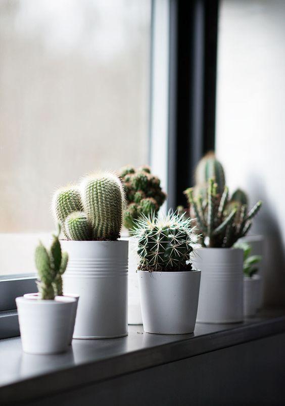 succulents on window cill.jpg