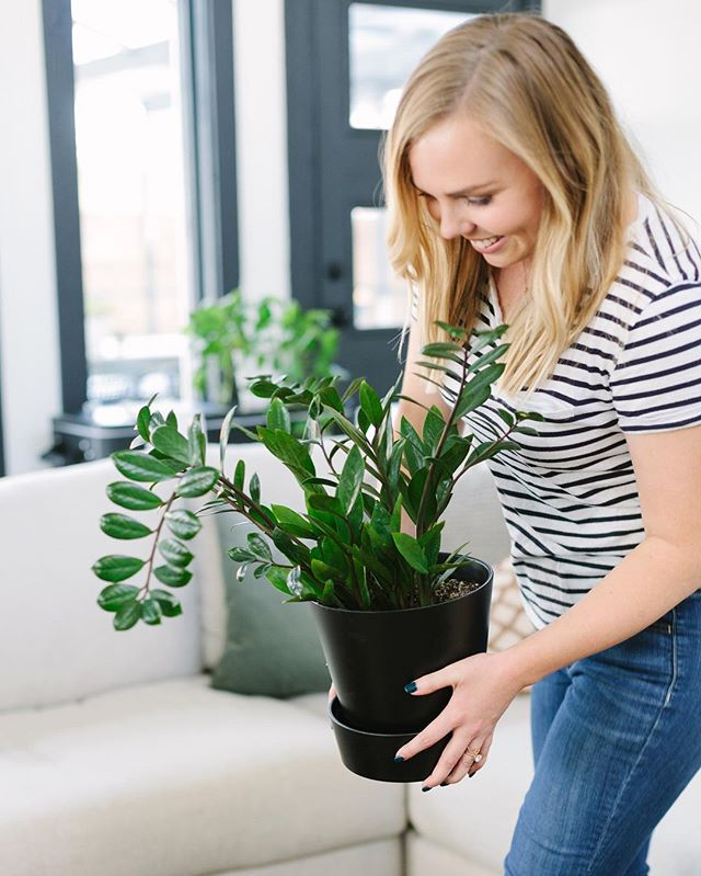Happy Friday! Since there are so many new faces around here I figured I'd (kind of) show my face! I'm Jamie, and I love a good ZZ plant 🌱- they are superrrr easy to keep alive, even if you've got a black thumb. 😉What's your favorite indoor plant? (Bonus points for hard to kill!) 📷: @sarahjoellephotography #studiogaspo #indoorplants #zzplant #interiordesign #interiorstyling #currenthomeview #homesweethome #theeverygirlathome #smmakelifebeautiful #cljsquad #orlandoremodeling #beforeandafter #apartmenttherapy #sodomino #mydomaine #tgif
