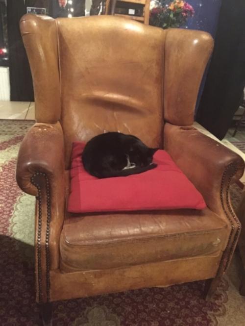 The Tea House cat