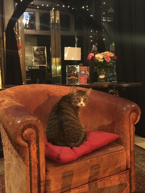 Gladstone, the other Teahouse cat