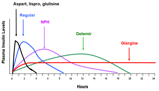 As you can see in this chart Novolin R (Regular), when taken intravenously peaks at around 2 hours and diminishes over 8-9 hours.