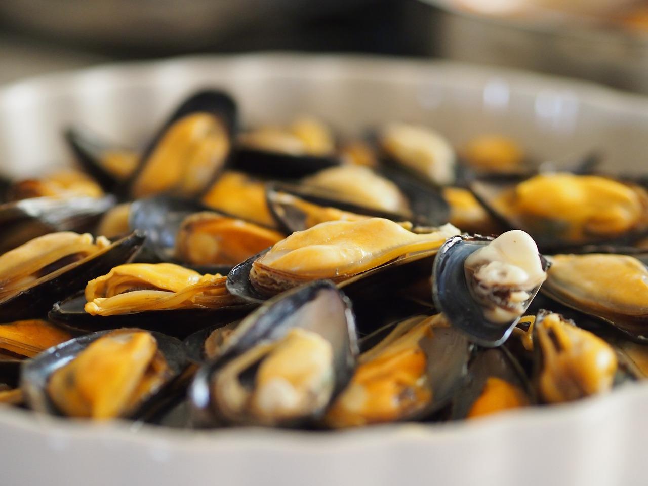 saxiotoxin mollusks