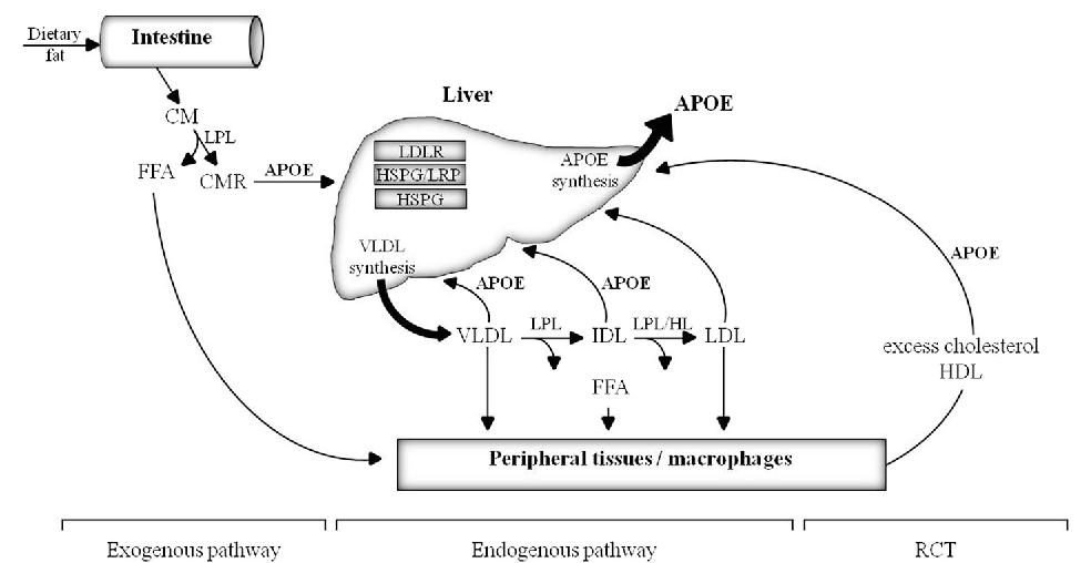 https://lipidworld.biomedcentral.com/articles/10.1186/s12944-016-0288-2