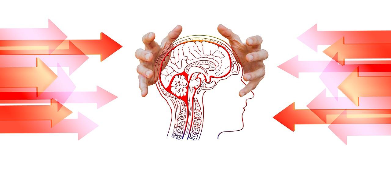 mybiohack j147 brain.jpg