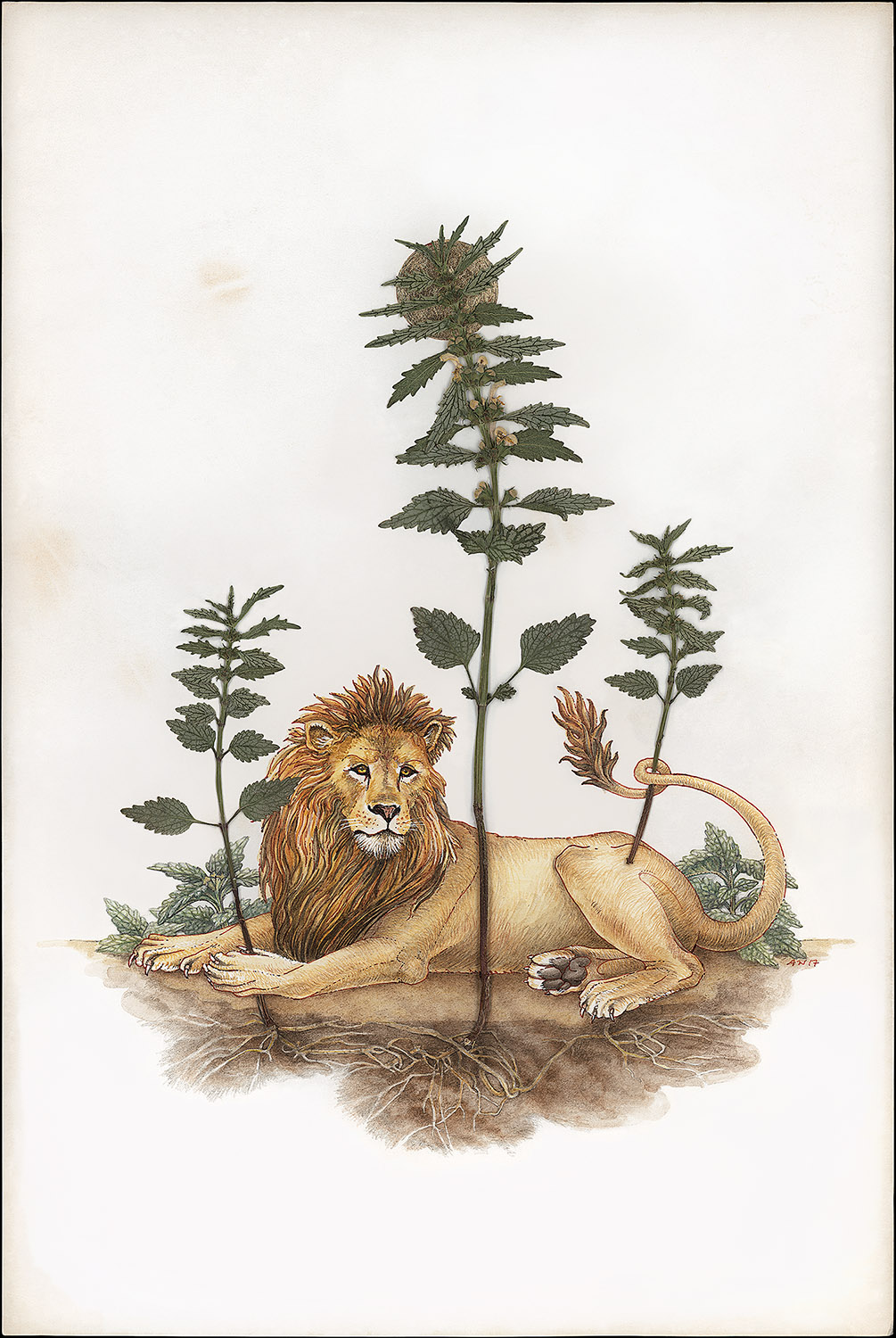 Lion Lies Down with the Lamium