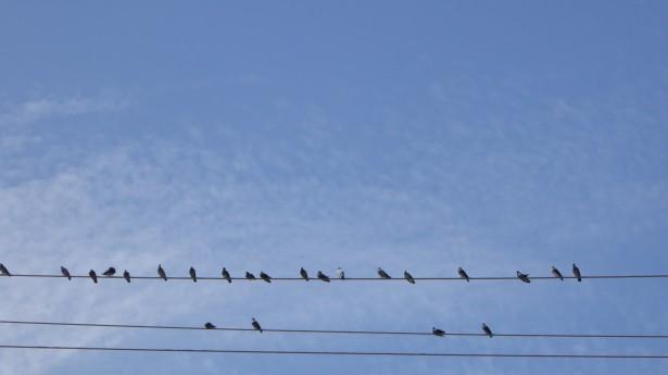 birds-on-a-wire-background.jpg