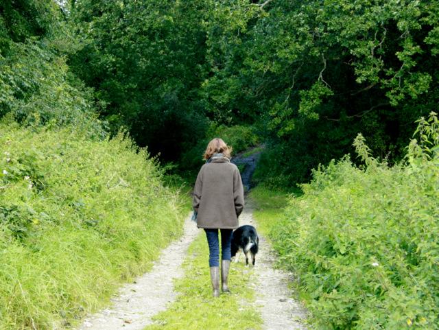 Walking_the_dog_on_Honey_Pot_Lane_-_geograph.org.uk_-_1478722.jpg