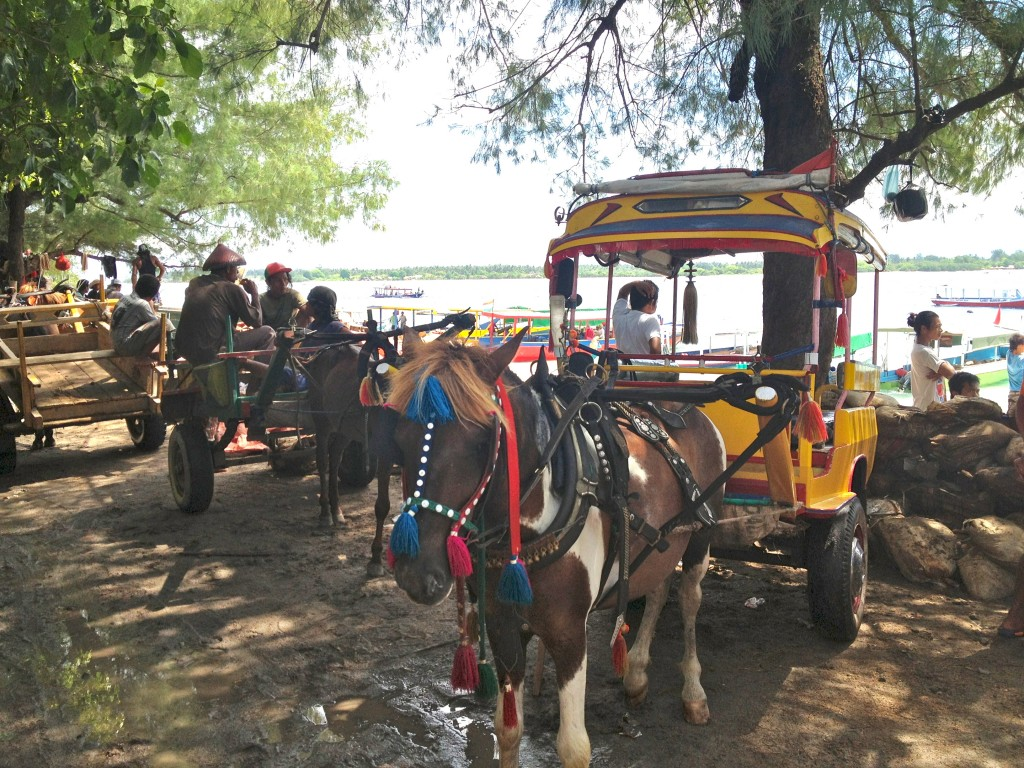 The only means of transport around Gili T is by horse and buggy