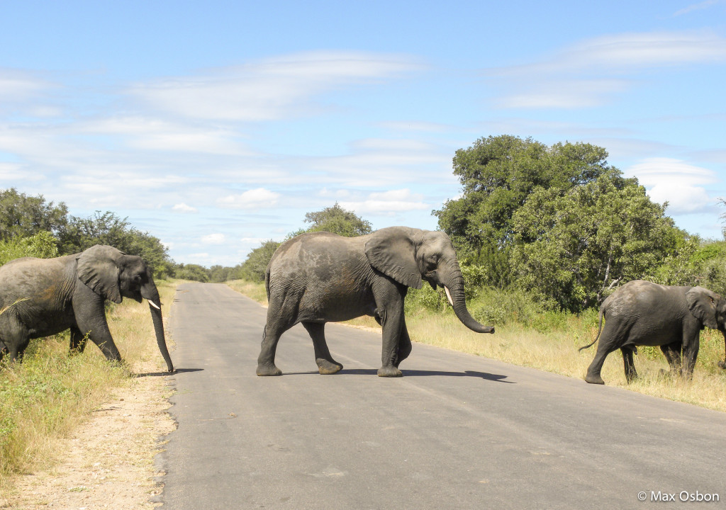 Elephant crossing on random afternoon in Zimbabwe.