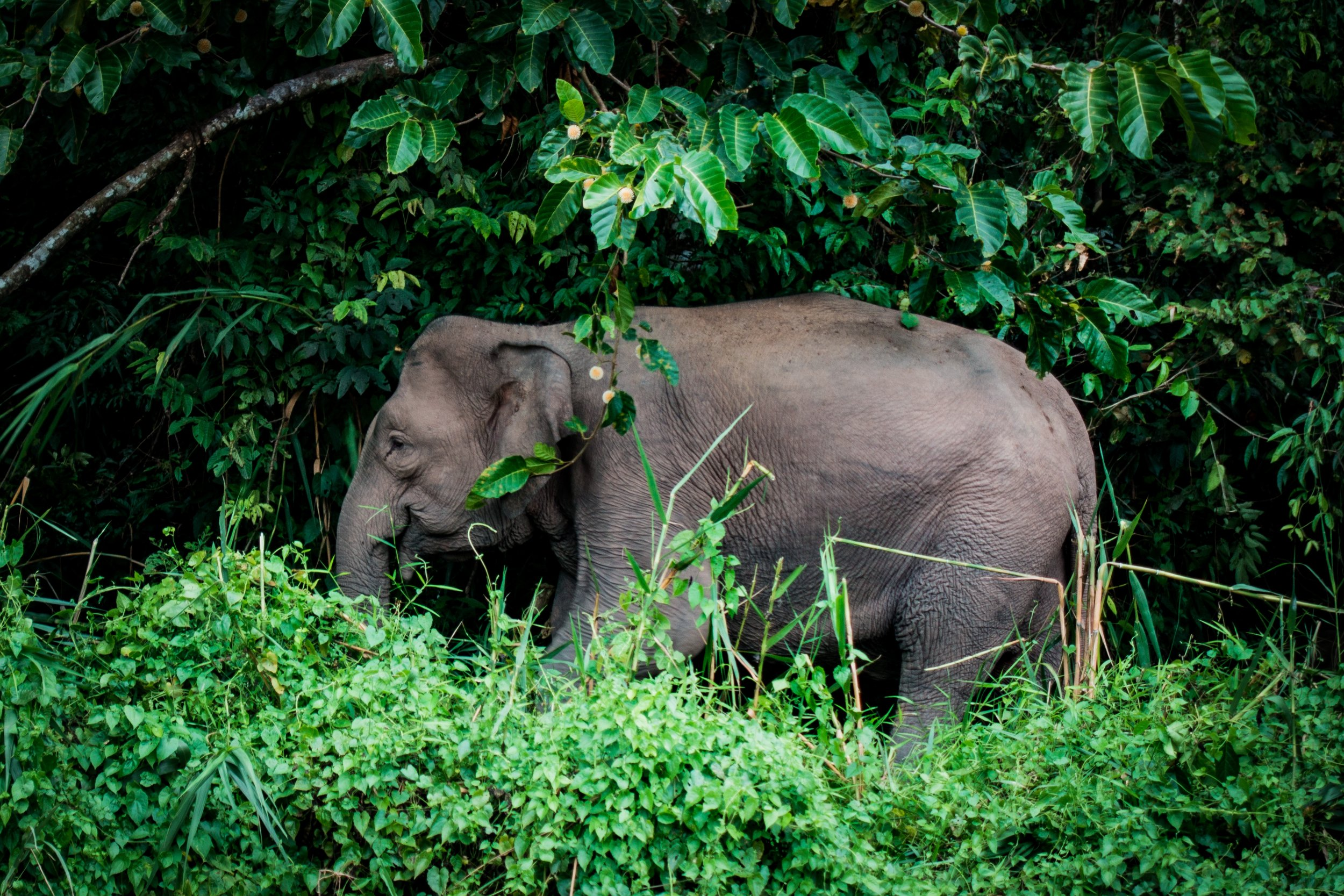 Mondulkiri - Mondulkiri is a region dominated by rolling hills, dense groves and emerald rainforests. It is home to the native Buong people who live peacefully with elephants.
