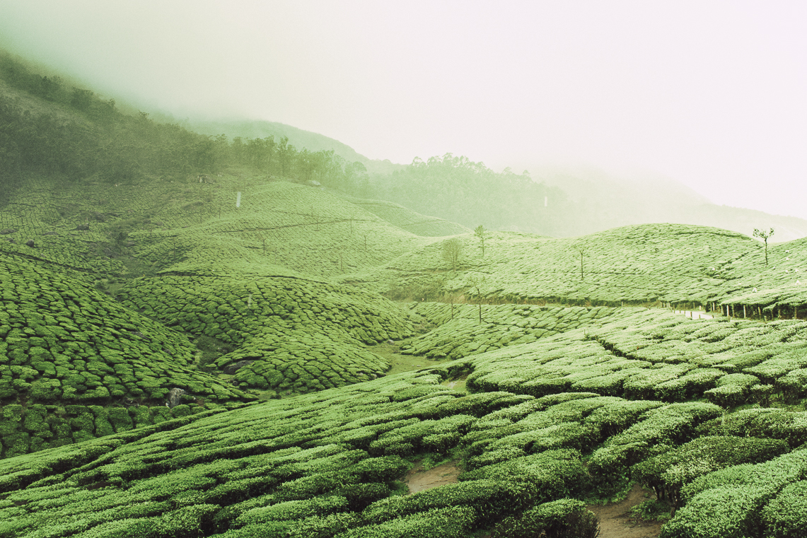 Munnar - Explore Kerala's lavish tea lands and green hills, with British established plantations and centuries-old estates.
