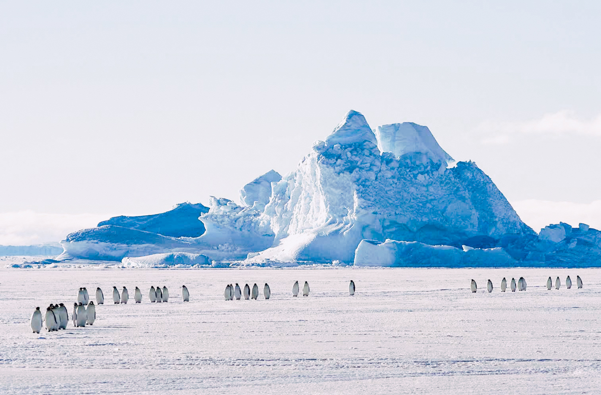 Antarctica - Penguin colonies, epic glaciers and an exciting flight to the geographic South Pole are only the beginning of this thrilling experience in one of the world's last unchartered frontiers.