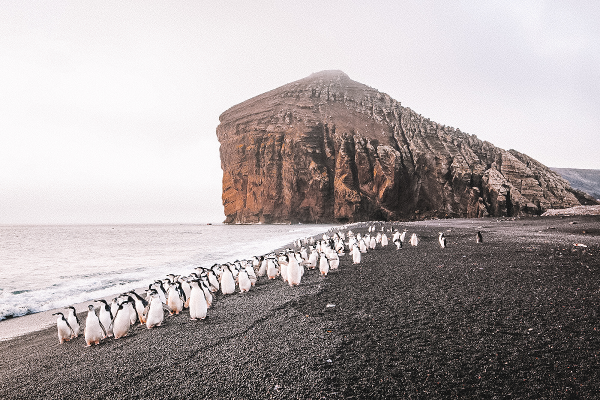 south georgia - The dramatic setting of South Georgia boasts a rich wildlife that has attracted some of the most famous Antarctic explorers across centuries.