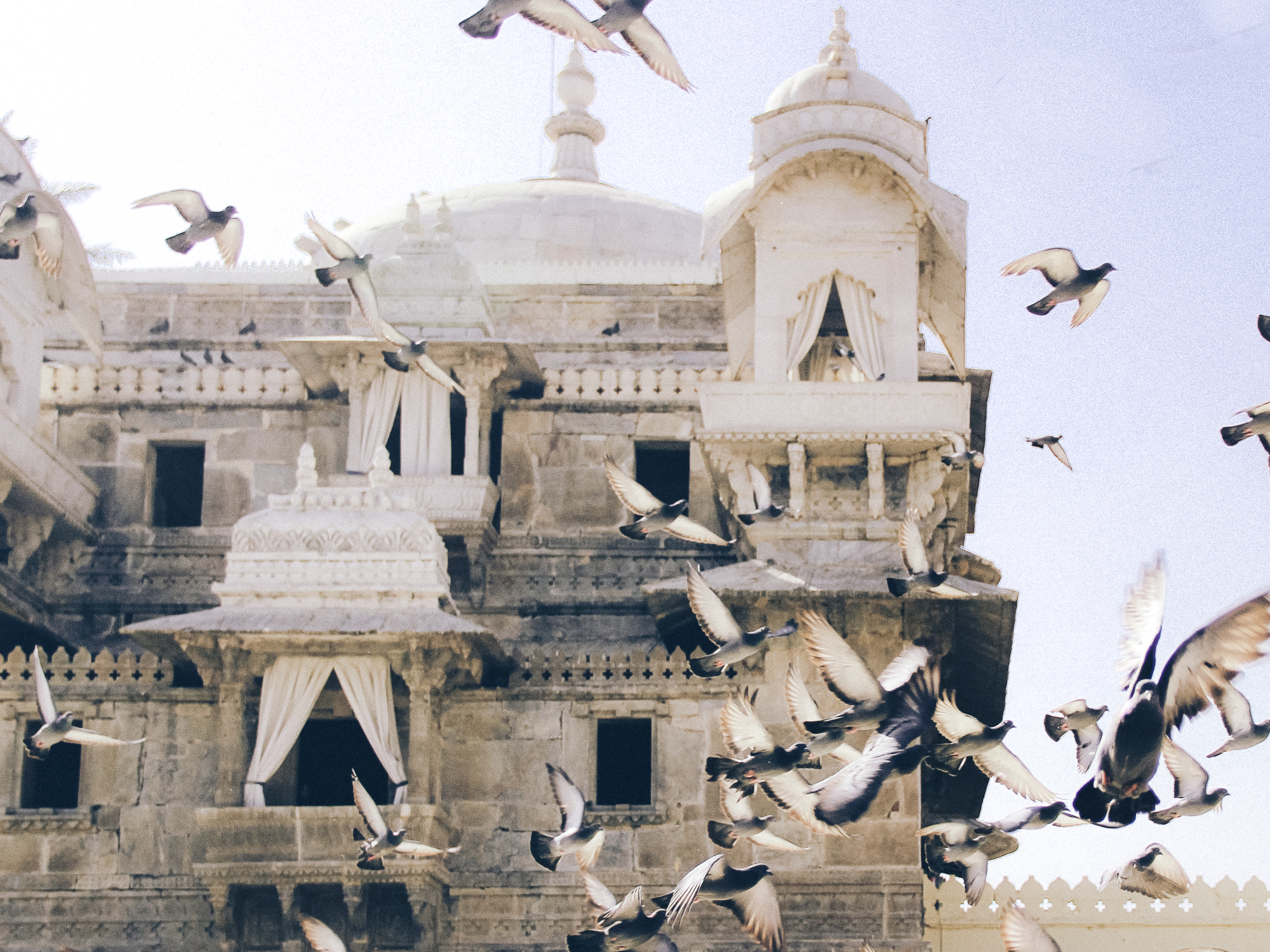 (web) North India - Birds.jpg