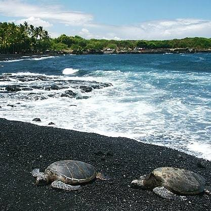 turtles black sand beach.jpg
