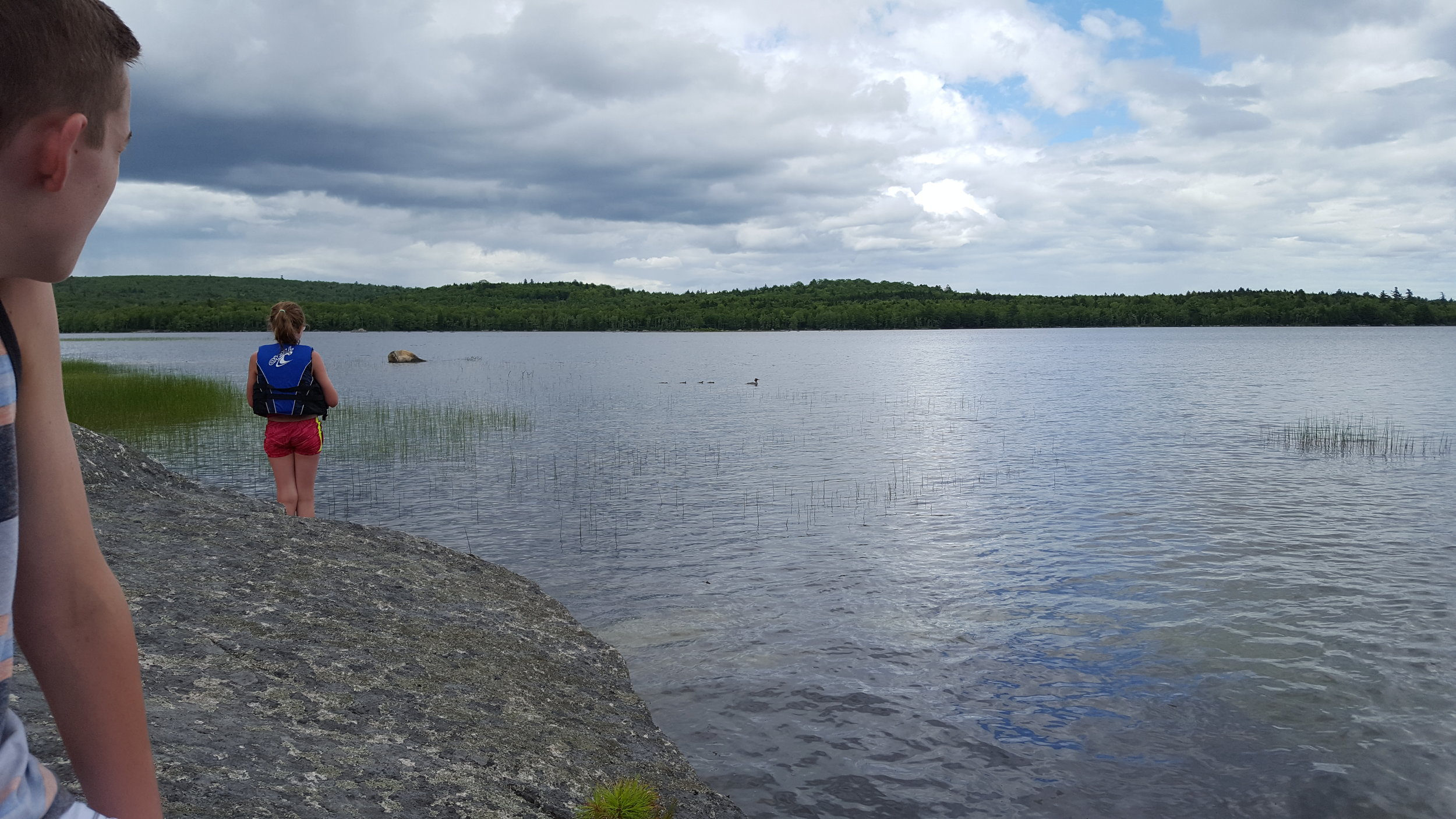 Henry and Emma watch the mergansers