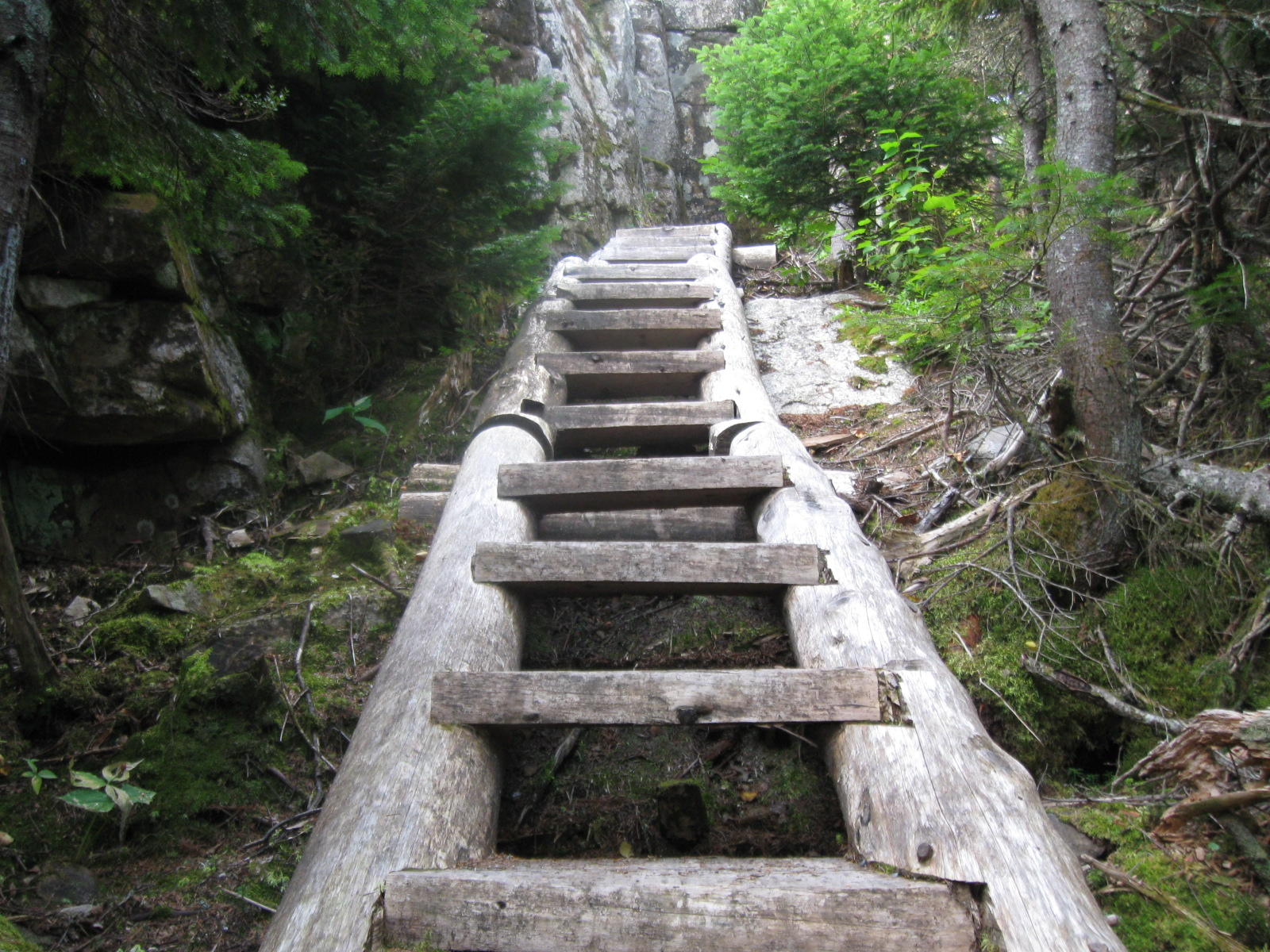 One of the easy ladders on Sunday River Whitecap near where I met a moose one humid Sunday morning