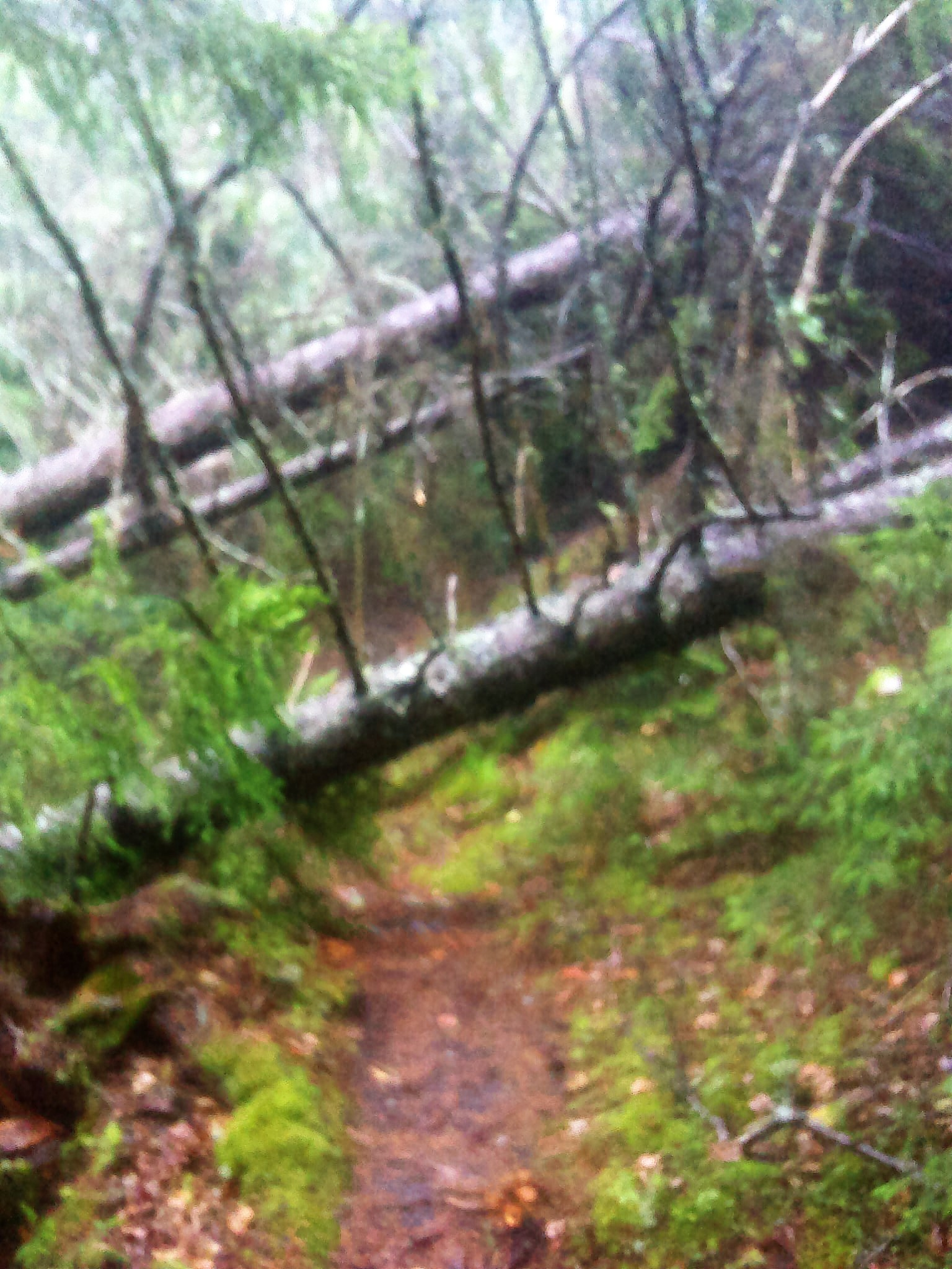 A fuzzy shot of the blowdown taken in the rain minutes after it happened