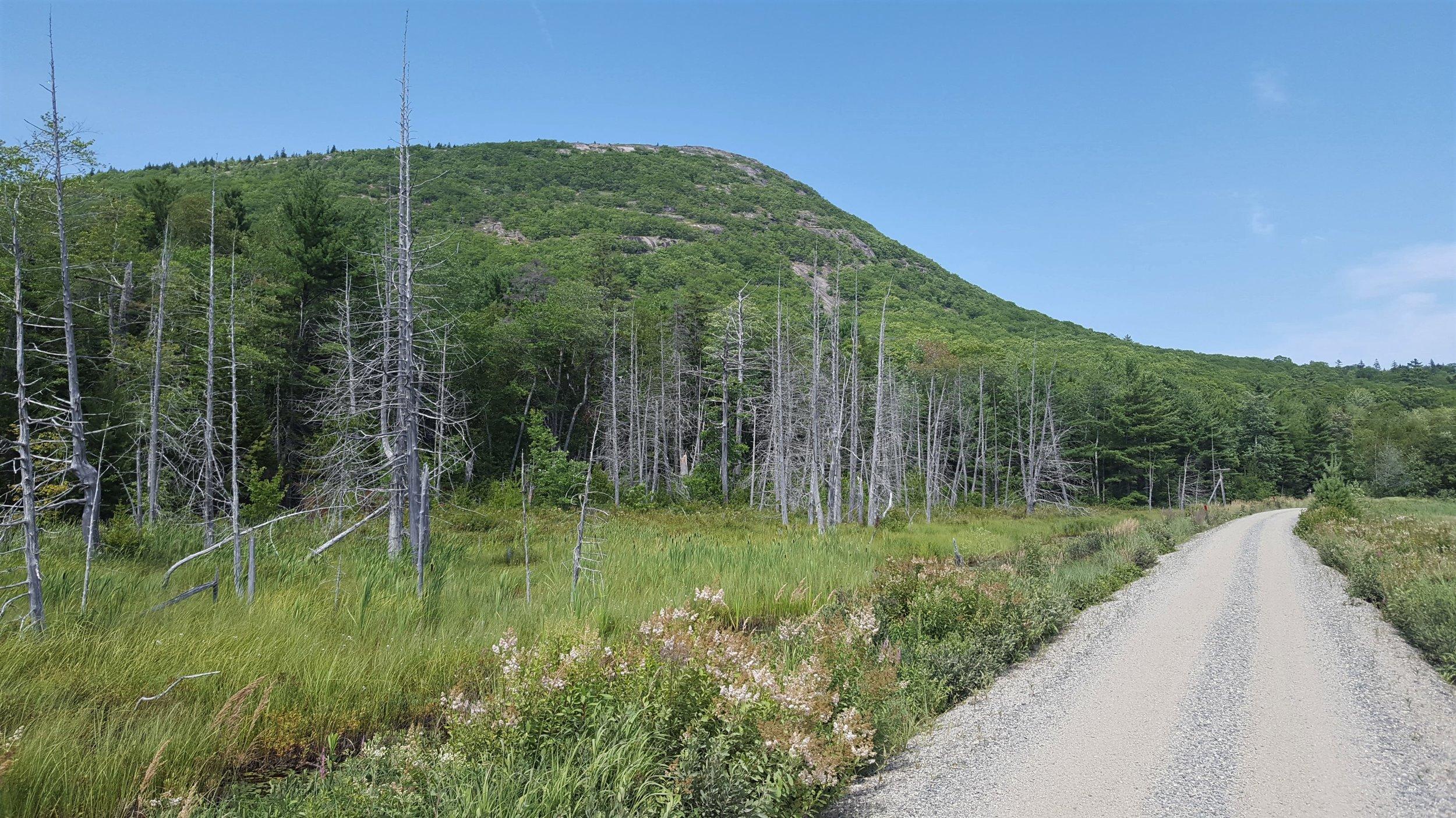 Schoodic Mountain from Downeast Sunrise Trail