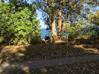 bike on nice fall day.jpeg
