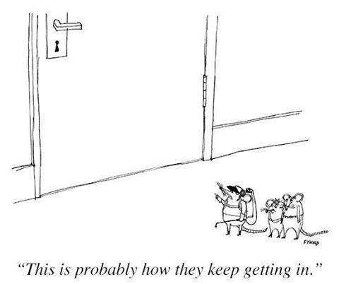 Mice on the humans getting in the door.jpg