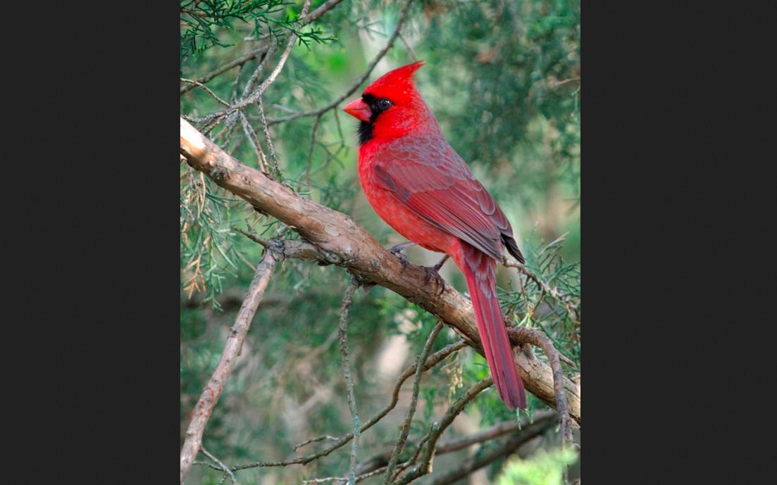 Cardinal+2nd+Image.jpg