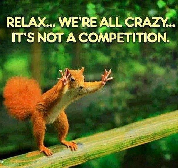 Crazy Squirrel Picture.jpg