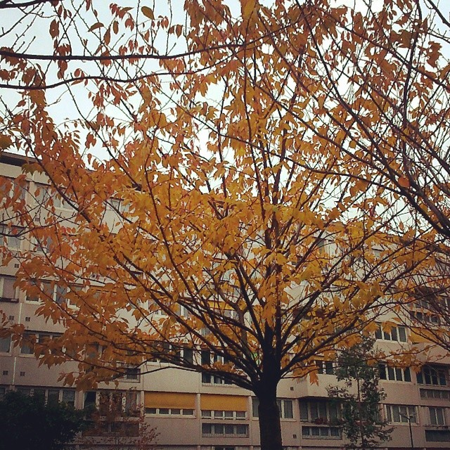 yellon-tree-urban.jpg