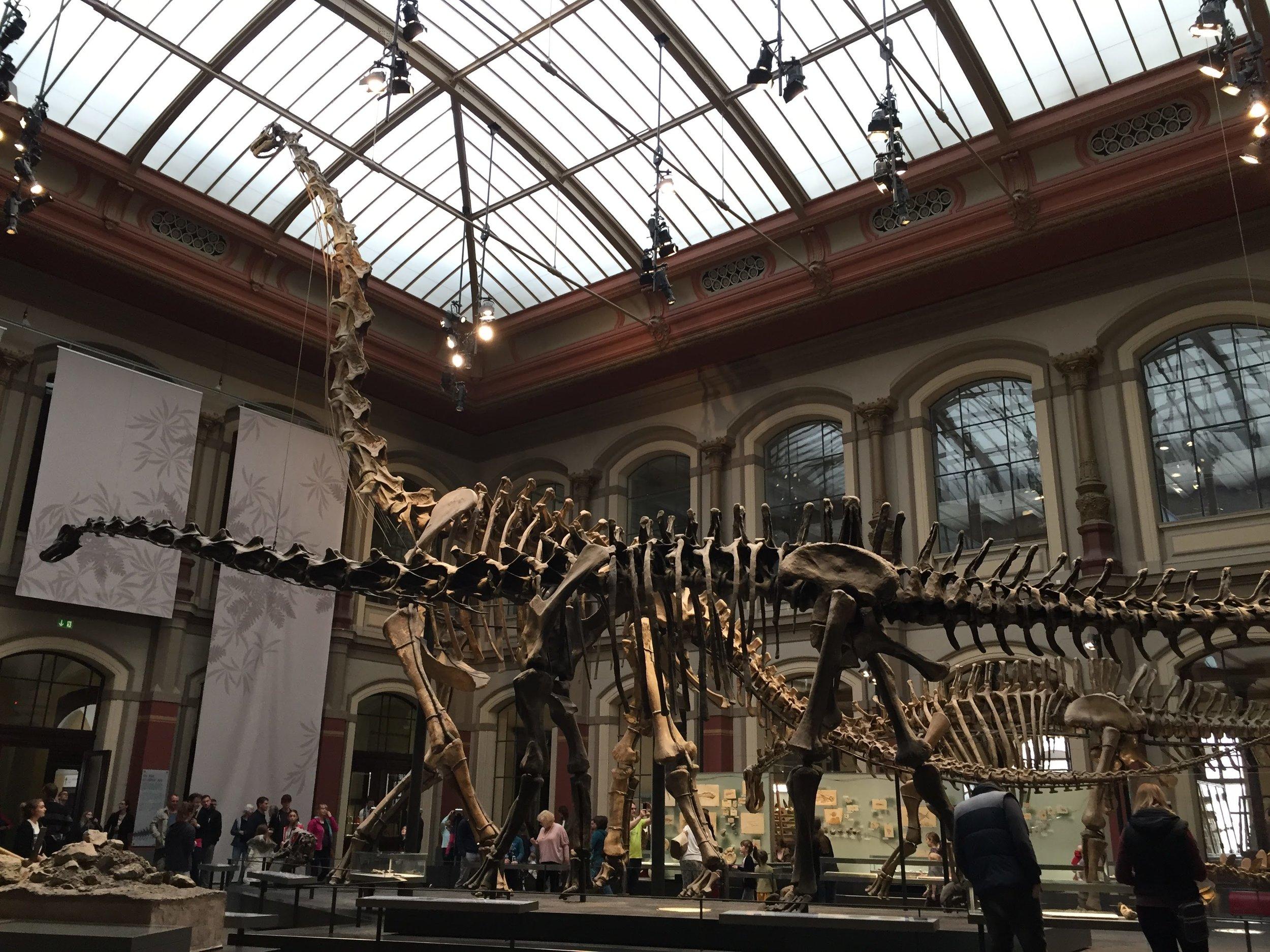 An impressive Brachiosaurus Specimen welcomes you at the entrance
