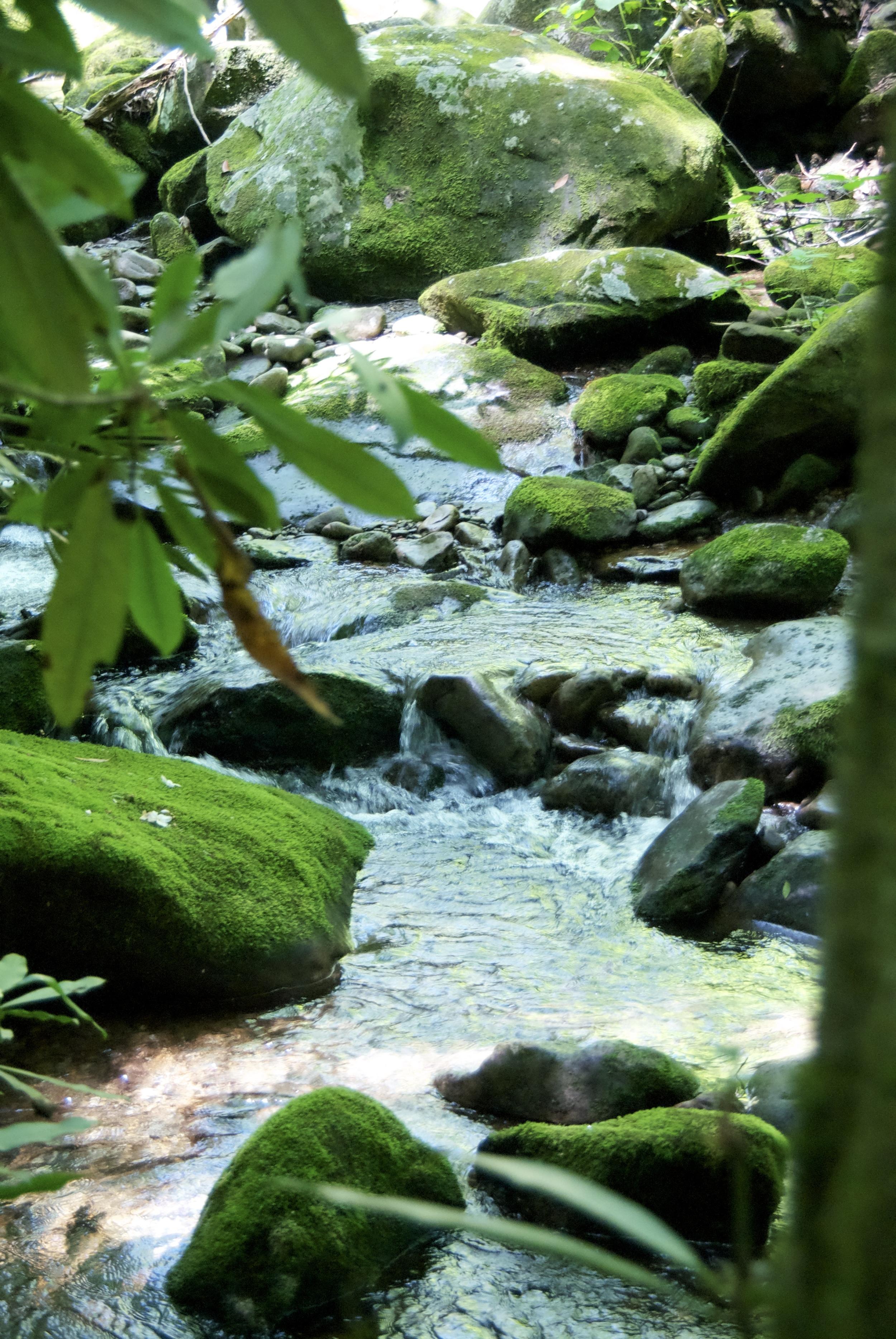 Rock Creek, along the hen wallow falls trail